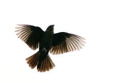 bird photopin
